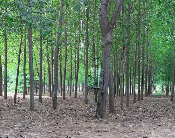 Лес и китайский хамелеон человек-невидимка Лю Болинь сливается на фото с окружающим миром